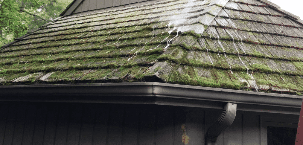 Moss Growth On Your Cedar Roof? How To Handle It.